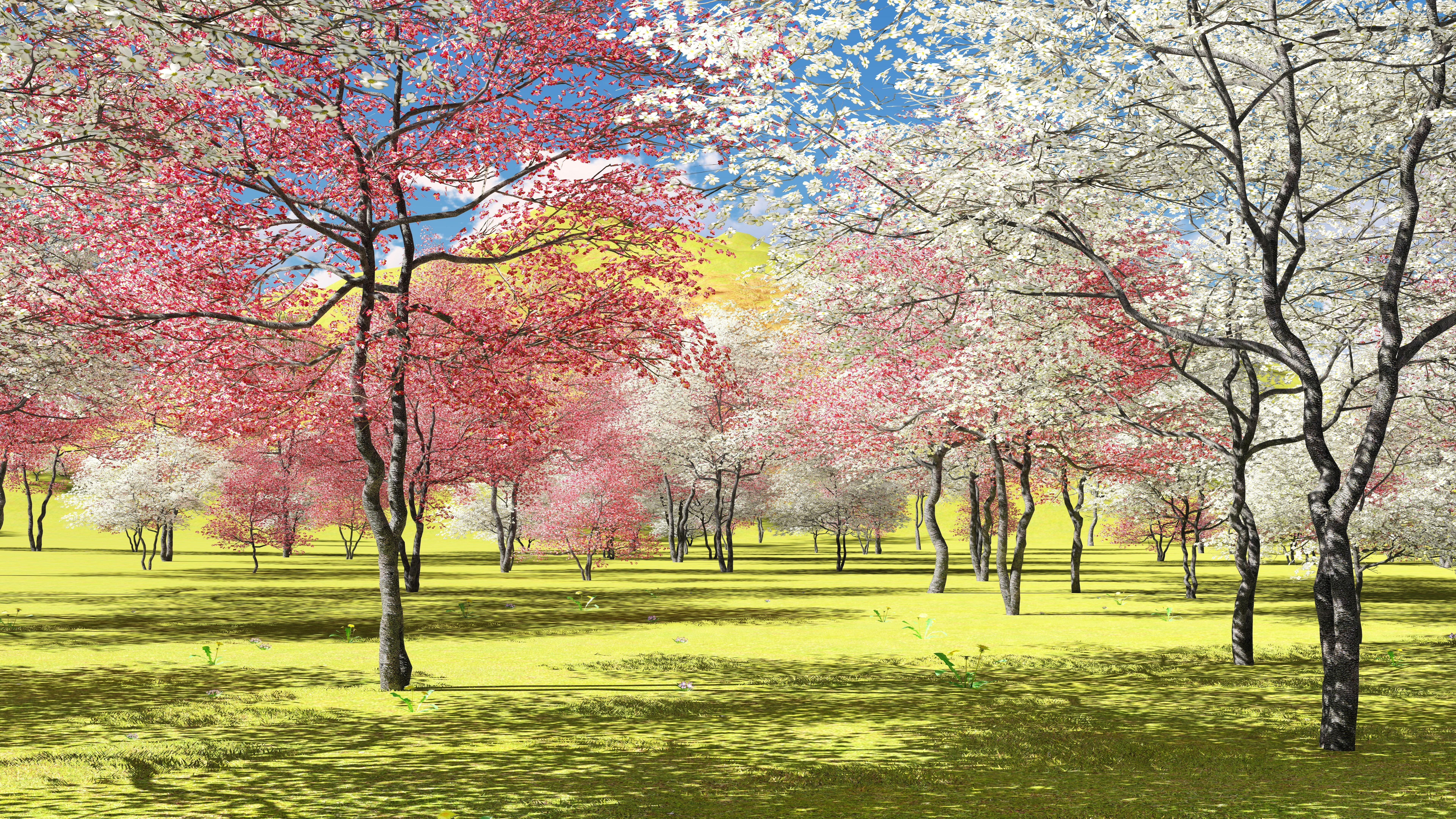 Garden Variety A Guide To Picking Trees With Pretty Spring