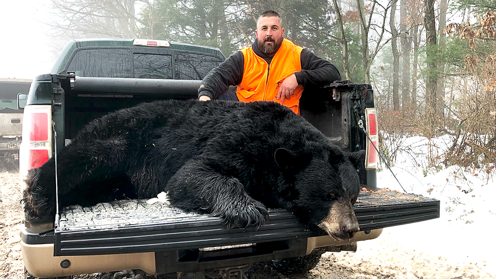 Clinton County bear kills remain at top with 119   News, Sports, Jobs