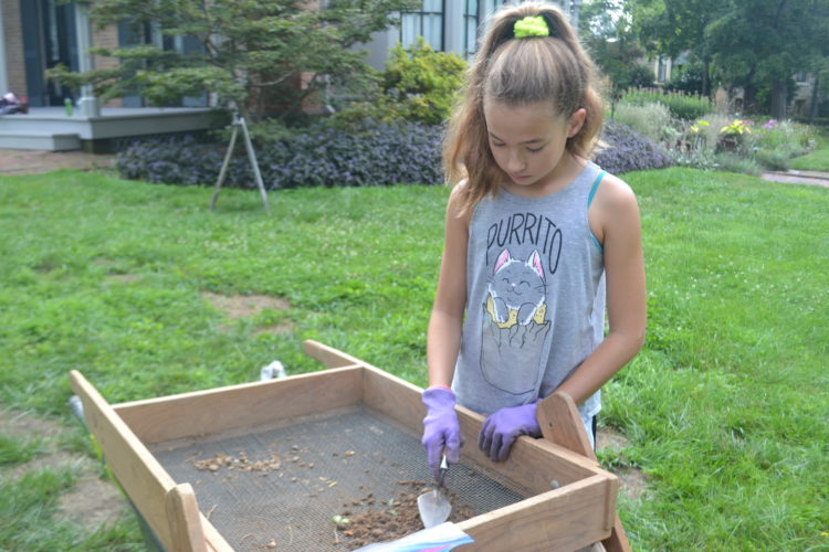 PEYTON NEELY   The Marietta Times Jenna Jackson, 11, of Marietta, looks through dirt for artifacts at The Castle's Kids' Archaeology Camp on Wednesday.