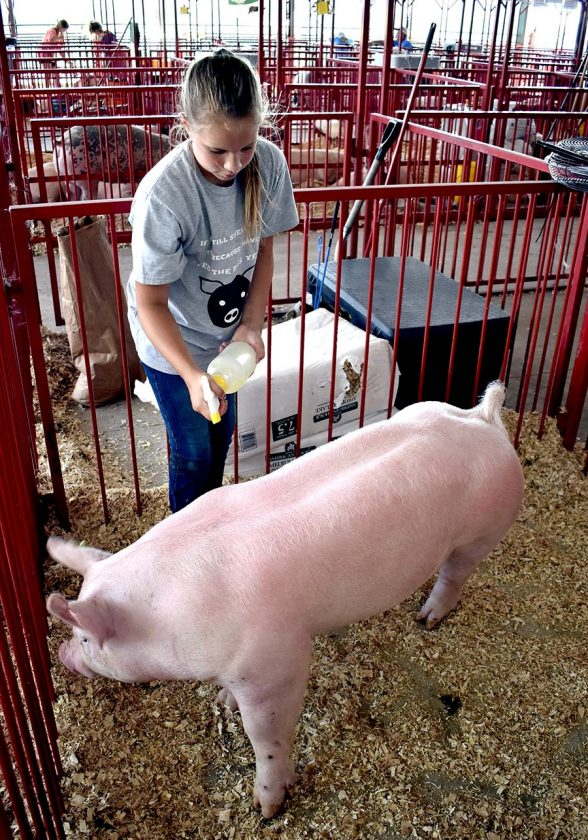 Wright County Fair carries on 4-H tradition | News, Sports