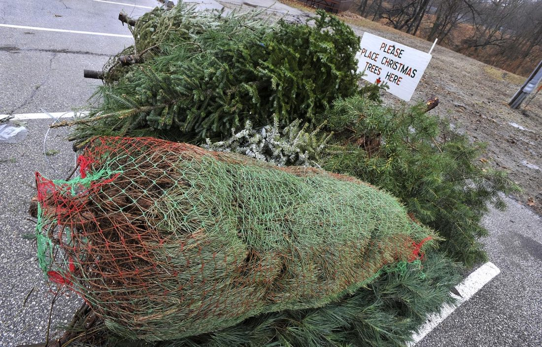 Drop off your Christmas Tree for free recycling