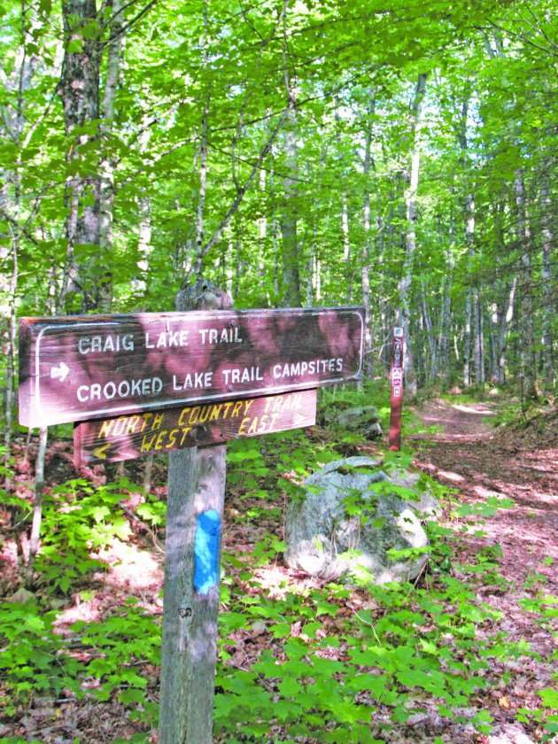 Welcome to moose country | News, Sports, Jobs - The Mining
