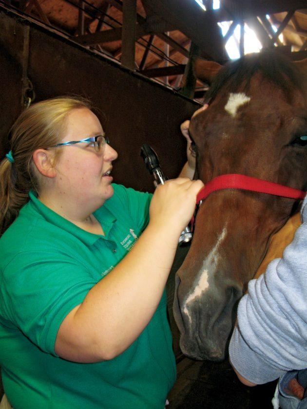 Healthy horses   News, Sports, Jobs - The Mining Journal