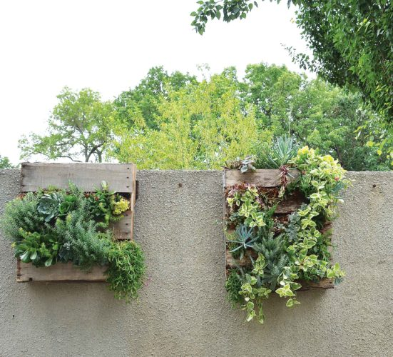 Eloise Ogden/MDN These wall planters with succulents are at Minot's Roosevelt Park Zoo but could be done in an outdoor home setting to dress up a wall or fence. Shannon Paul, Minot Park District horticulturist, said the planters are wooden pallets that have been cut down and then landscape fabric stapled to the back and sides. Soil is placed inside the pallet planters. The planters are laid on a bench for planting and are kept flat for about a month and a half until the plants grow and root. These planters are great for planting succulents but also annuals can be planted in them.The plants can be watered from the top or front of the planter.
