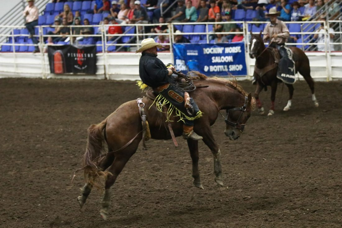 Bulls, broncs bring bewilderment | News, Sports, Jobs - Minot Daily News