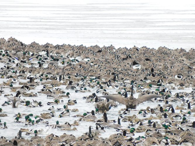 Birds in chilly water
