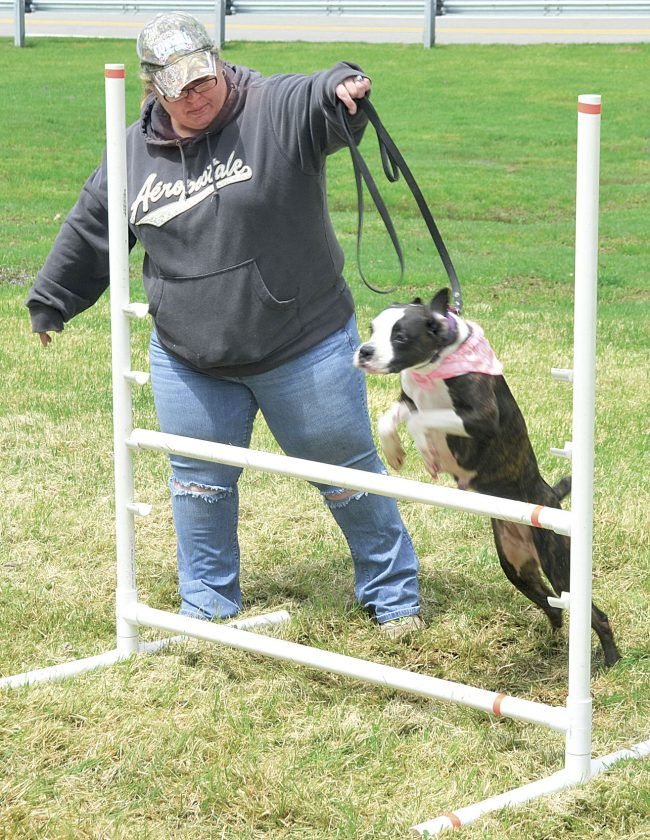 Dogs have their day at Mountwood Park's Woof Fest | News
