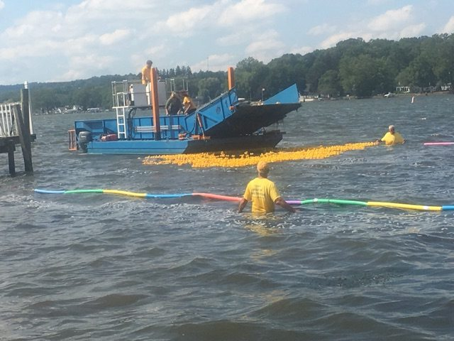 Over 2,000 rubber ducks were dumped into Chautauqua Lake during the annual Rubber Ducky Race sponsored by the Greater Chautauqua Federal Credit Union during the Chautauqua Lake Dragon Boat Race on Saturday. Photo submitted by Lee Harkness
