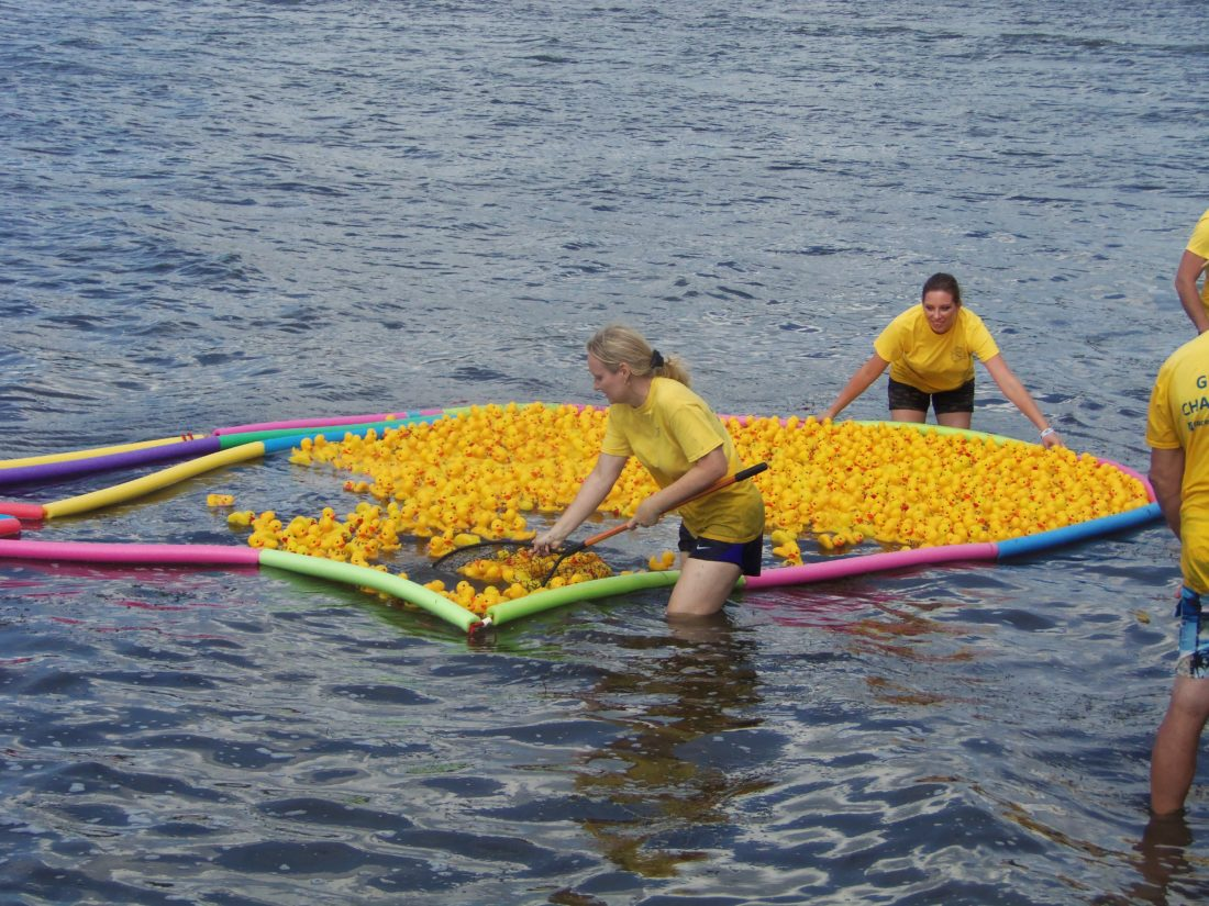Workers corral around 2,000 rubber ducks used Saturday at the Chautauqua Lake Dragon Boat Festival on Saturday. The event's proceeds were split between the Chautauqua Lake Association and the Laker's Disabled Sled Hockey Team.  P-Jphoto by Katrina Fuller