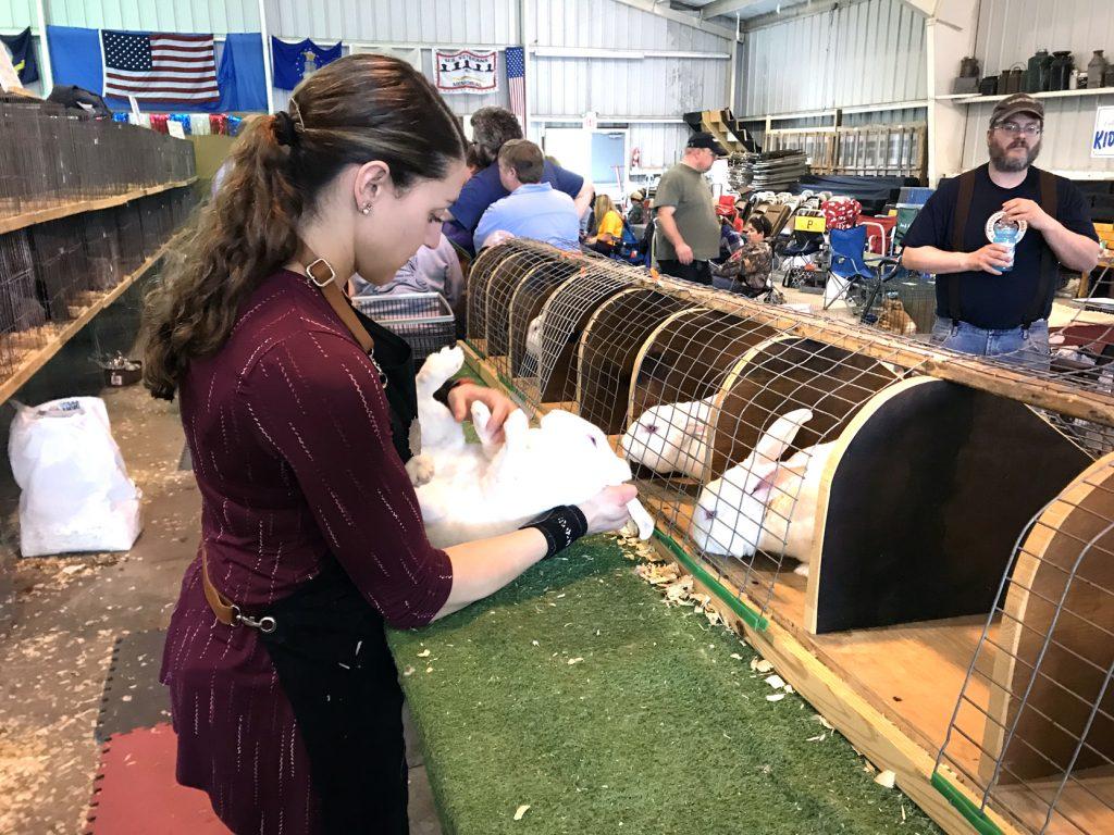 Rabbit rouser | News, Sports, Jobs - Salem News