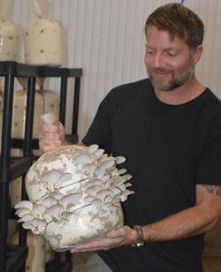 PAT CROSSLEY/Sun-Gazette Correspondent       Dustan McKee,  co-owner of Greenwood Farms, holds a bag  of sterile sawdust with oyster mushrooms  growing on it.  McKee grows  these and lion's mane mushrooms  at his farm  outside of Millville.
