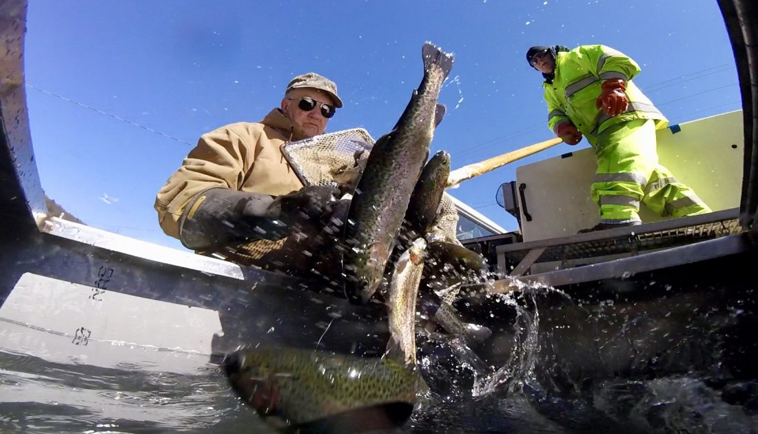 Stocking of creeks means it's almost trout season | News, Sports