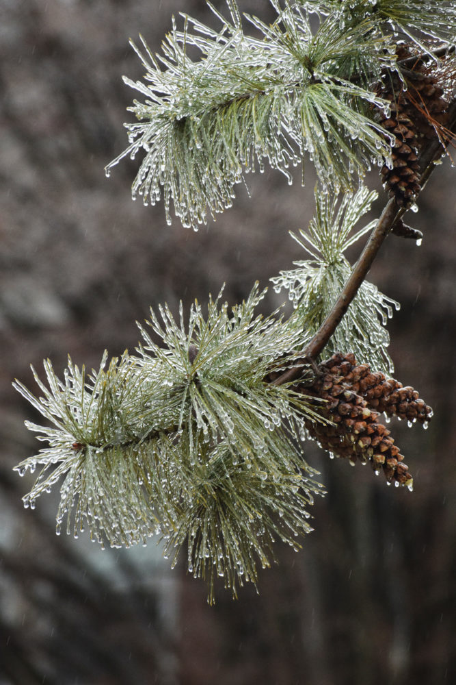 Photo by Scott McCloskey Freezing rain throughout the area left much of the Upper Ohio Valley as a winter wonderland.