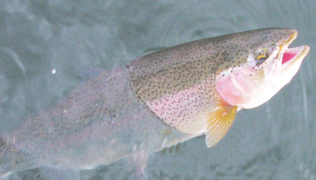 State stocks up on Trout before season opener   News, Sports, Jobs