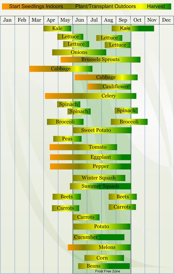 Zone 5 Chart for Starting Seeds, Planting/Transplanting, and Harvesting
