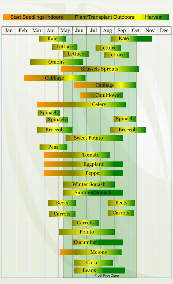 Zone 6 Chart for Starting Seeds, Planting/Transplanting, and Harvesting