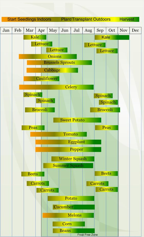 Zone 7 Chart for Starting Seeds, Planting/Transplanting, and Harvesting