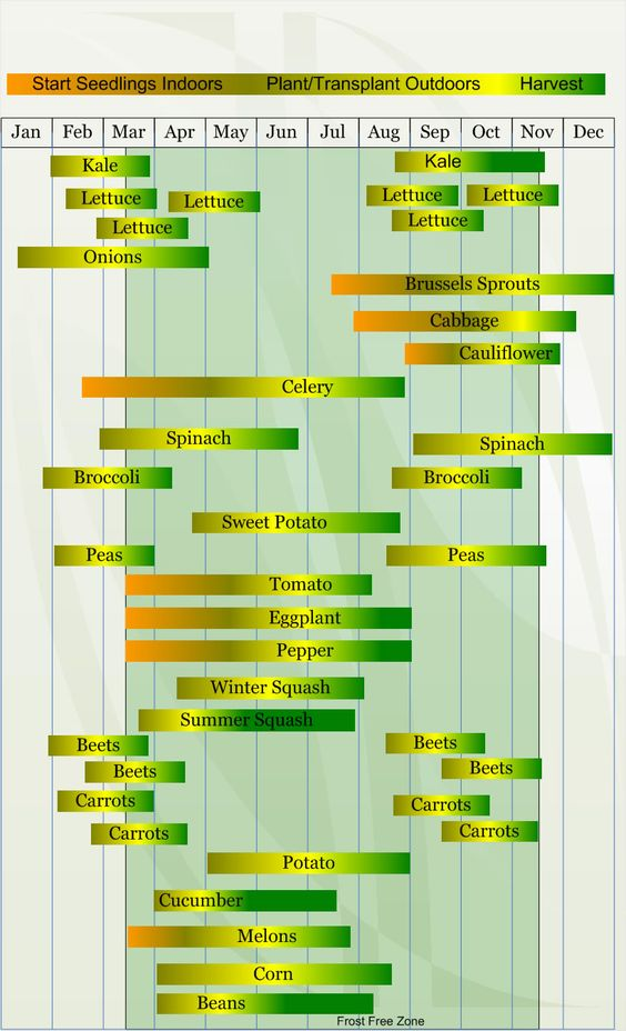 Zone 8 Chart for Starting Seeds, Planting/Transplanting, and Harvesting