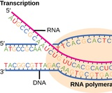 Biology I Course Content, Genes and Proteins, Genes and Proteins Resources