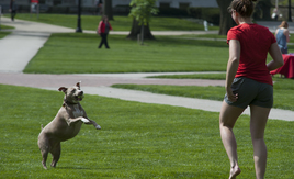 Fetch on the Oval