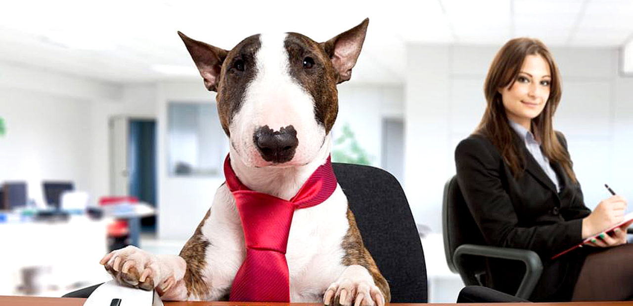 Take Your Dog To Work Day