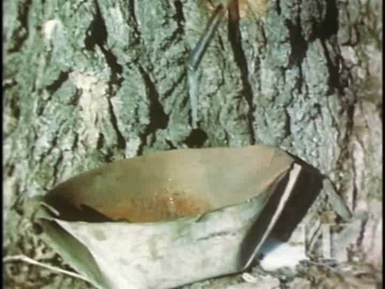 biskitenaagan
