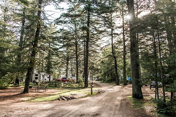 Park a Beautiful natural forest landscape