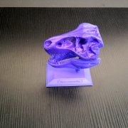The T-Rex Skull