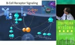 TKIs, Apoptotic Enhancers, and other Small Molecules in the Pipeline