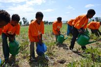 Sweet potatoes: A special ingredient for Ethiopian schools