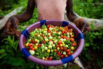 Amazing Africa: Proud farmers