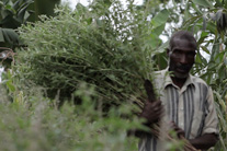 2012 ONE Africa Award: Saving a forest while developing a community