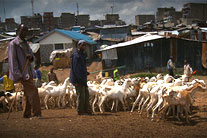 Real Stories: In the harsh Mathare slum, a bright spot