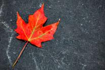 Canada is beautiful… at saving lives!