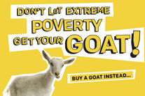 Infographic: #GiveaGoat this #GivingTuesday