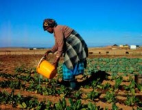Lifting the lid on trade policy can help African farmers thrive