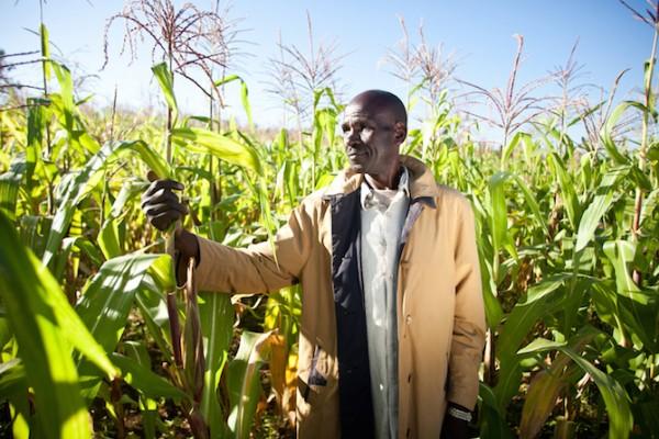 Francis, a Nuru farmer, stands in his field of maize. (Photo credit: Nuru International)