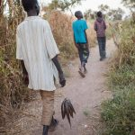 Carrying their day's catch, Kir Buth, 15, trails Guor Path, 14, and Dictor Arak, 15, on their way back from a swamp near Yida, South Sudan. They will immediately take the fish to market to sell, sharing the money equally. © Andrew McConnell