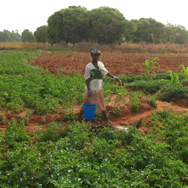 Mali's government has pledged to empower women in agriculture