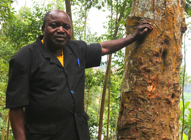 Abel: Protecting the forests of DRC, one tree at a time