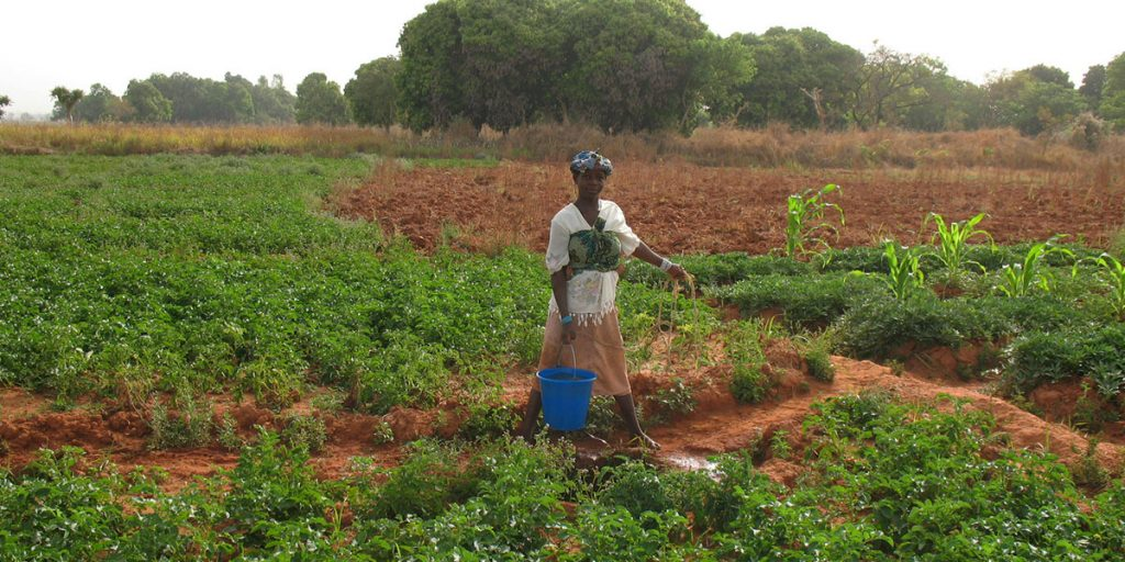 A farmer in Mali. (Photo credit: IICD/Wikimedia Commons)