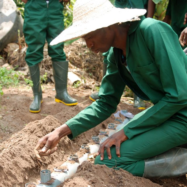 Is Nigeria truly committed to agriculture?
