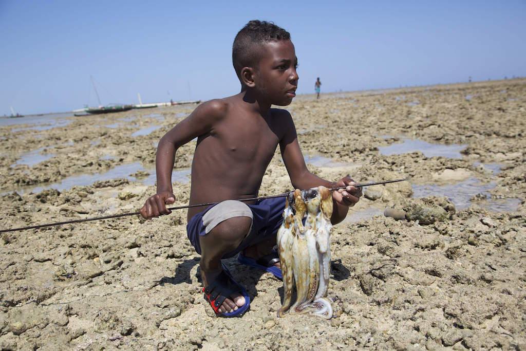 Wie Wissen über Tintenfische die Einkünfte eines ganzen Fischerdorfes verdreifachte