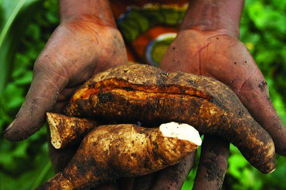 Wieso du dasGlobalAgricultureand Food Security Programme(GAFSP)kennen solltest