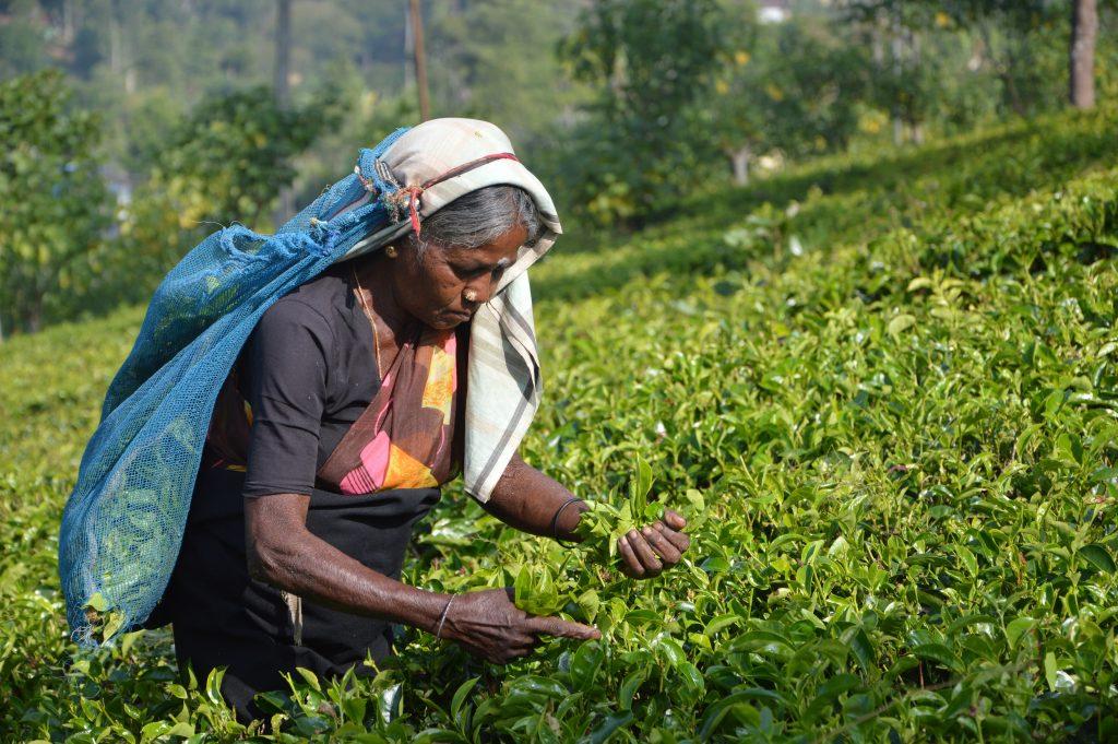 Frauen Landwirtschaft