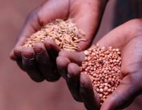4 politiques à mettre en place pour lutter contre la faim