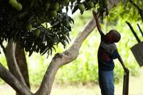 Des promesses aux actes : l'heure est venue d'investir plus et mieux dans l'Agriculture !