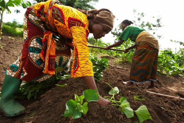Women farmers growing sweet potatoes in Tanzania. Photo: Morgana Wingard/ONE
