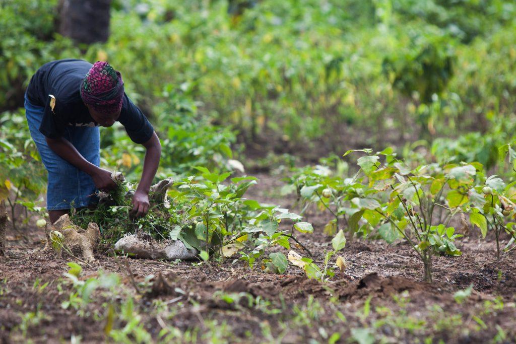 RED_ONE-Liberia_Ghana-141-1024x683.jpg