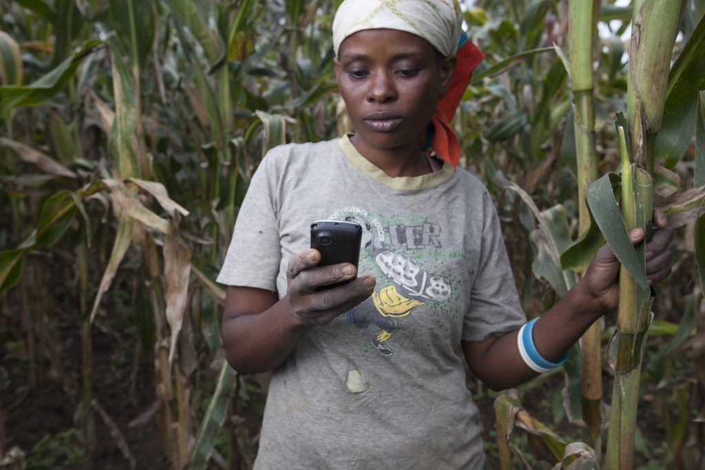 Maize farmer Zaugia Nyiransengimana of the Impabaruta Co-operative, trials 'Agro-fiba APP' during a visit from Lilian Uwintwari of software development firm M-AHWII. Southern Province, Rwanda.